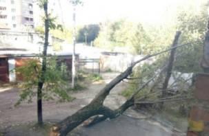 В Смоленске коммунальщики не хотят сносить аварийные деревья