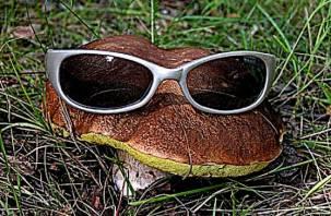 Кто в лес, кто по грибы: в Смоленске расследуют деятельность главы города