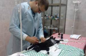 В смоленском приюте для животных появилась операционная