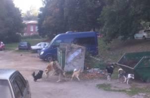 В Вязьме дети боятся выходить на улицу из-за собак