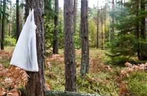 Стало известно о судьбе смоленских супругов, заблудившихся в лесу