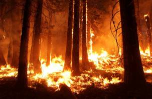 Смоленщина в огне. Появился прогноз лесных пожаров на апрель и май