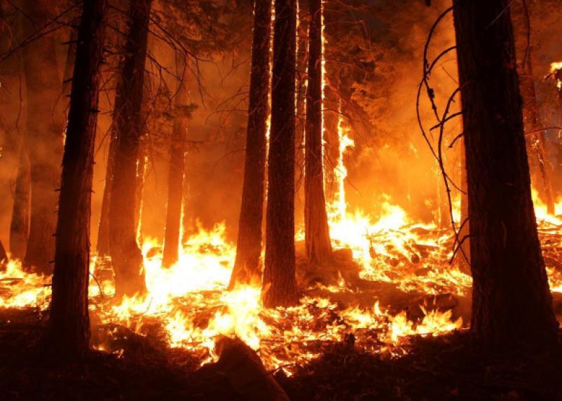 Штрафы за костры в лесу хотят увеличить