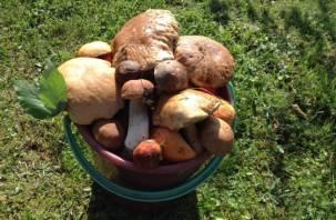 Россиянам напомнили о мерах предосторожности при сборе грибов
