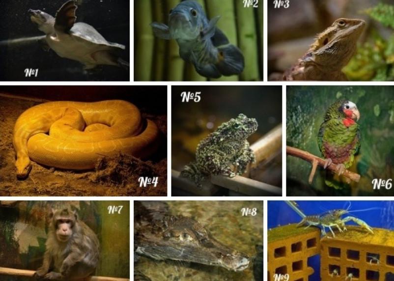 Исчезновение животных и растений идёт беспрецедентными темпами