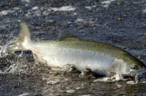 Селёдочные реки. Смоляне бьют тревогу по засорению Днепра