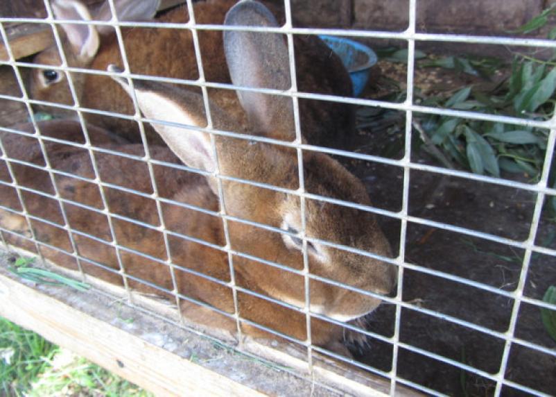 В Гагаринском районе загорелась ферма с кроликами