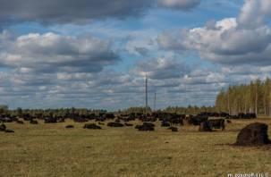 В Смоленской области исчез лейкоз