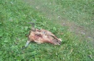 В Смоленске рядом с детской площадкой снова нашли отрубленную голову