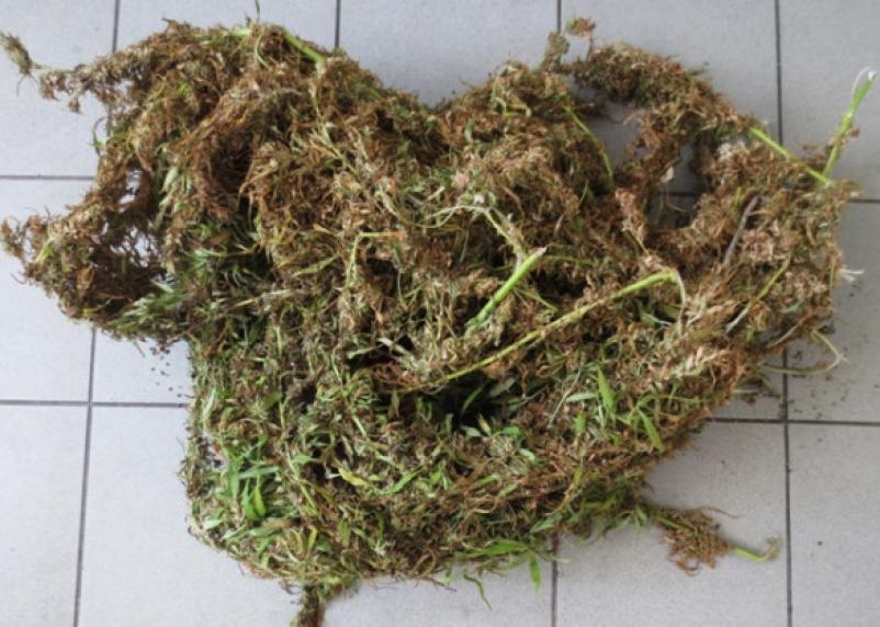 У жителя Смоленской области изъяли килограмм марихуаны