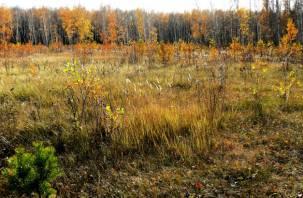 В Смоленской области гражданина оштрафовали за зарастание земель сельхозназначения