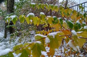 Зимане хочет уходить. Синоптики прогнозируют осадки в виде снега на вторник