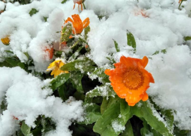 Россиянам рассказали о сроках появления «европейских» зим