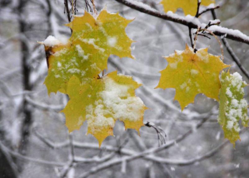 Сколько продержится золотая осень и когда выпадет первый снег