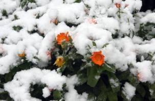 Температурные аномалии ждут россиян в декабре