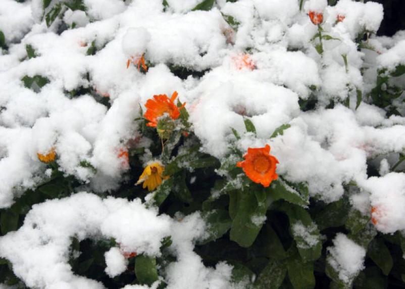 Январь поставил климатический рекорд