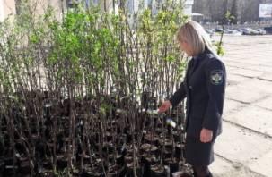 В Смоленск запретили ввозить тысячи саженцев растений