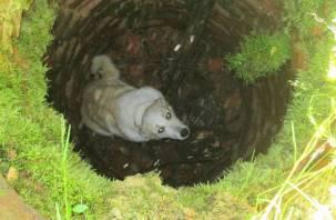 В Смоленске спасали собаку, упавшую в колодец