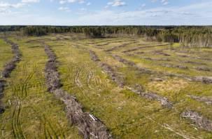 Дорубились. Гринпис обратился в прокуратуру по масштабной вырубке леса в Гагаринском районе