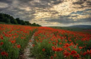 В России планируют выращивать наркосодержащие растения и комитет Госдумы одобрил этот законопроект