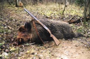 Смолянин устроил отстрел кабанов в чужом охотхозяйстве