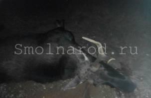 Иномарка подбила косулю и сделала кульбит в кювет в Рославльском районе