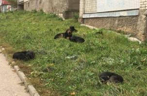 Неуловимые мстители: смоленские собаки «выучили» машины спецслужб