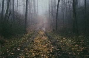 Двое взрослых и ребенок заблудились в смоленском лесу