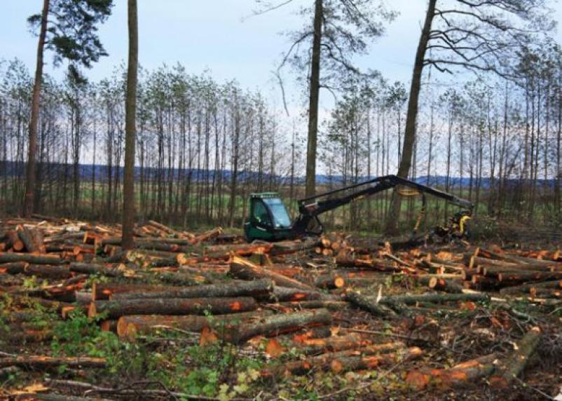 На Смоленщине Greenpeace обнаружил самую крупную в Евразии незаконную вырубку леса
