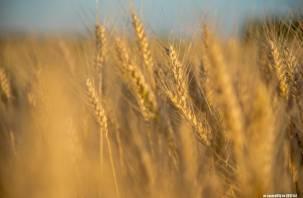 На Смоленщине власти озабочены ростом цен на зерно и муку