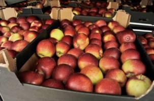 На Смоленщине уничтожили 9 партий нелегальных яблок из Беларуси