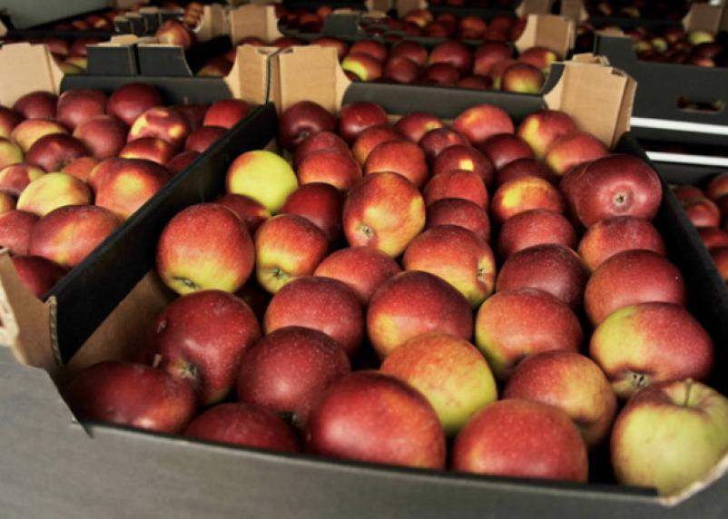 Почти 30 тонн яблок неизвестного происхождения «похоронили» в Смоленской области
