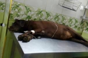 В Смоленске собака погибла из-за разбросанной на Королёвке отравы
