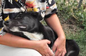 Смоленский приют для животных продолжает оставаться в критическом положении