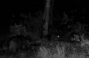 В «Смоленском Поозерье» дикие животные попали в объектив видеокамеры