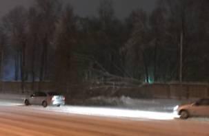 В Смоленске на дорогу упало дерево