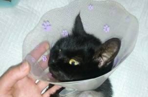 Смоляне пытаются помочь кошке, которая попала в капкан