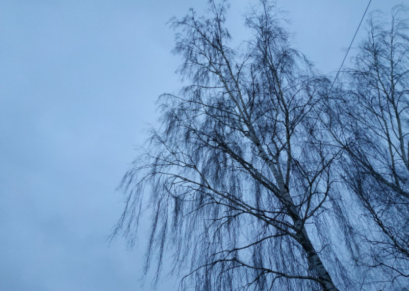 В Смоленской области водитель ВАЗ врезался в дерево