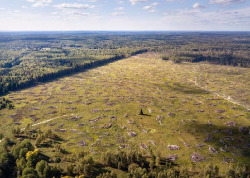 В Рославльском районе бизнесмен попался на незаконной вырубке леса
