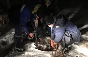 В Смоленске собака оказалась заложницей канализационного люка