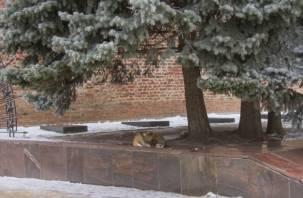 В Смоленске во дворе здания администрации поселится собака