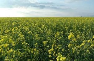 Смоленские аграрии заранее обсудили, чем хороши для региона лён и рапс