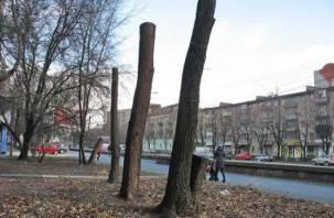 «Не допускать в нашем городе приём «посадки на пень». Эколог борется с уродованием деревьев в Смоленске
