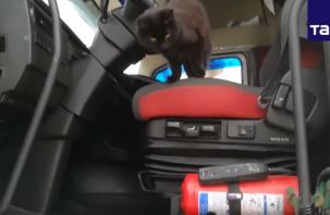 Кошка Шура из Смоленска колесит по стране с хозяином. Федеральное агентство показало видео