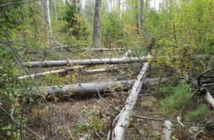 На Смоленщине выявлена незаконная порубка деревьев