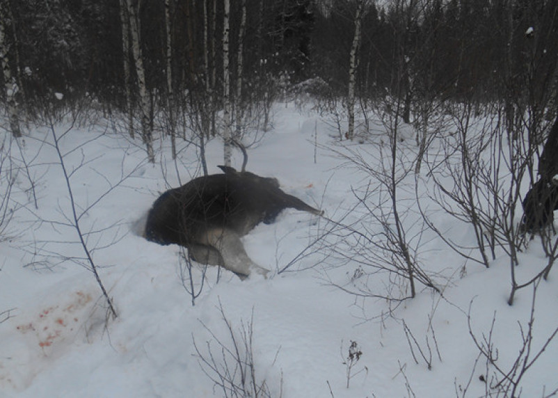 В Смоленской области установили новые сроки охоты на животных