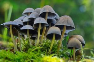Житель Твери насобирал на Смоленщине магических грибов