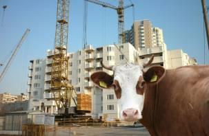 На Смоленщине стали меньше строить и доить коров