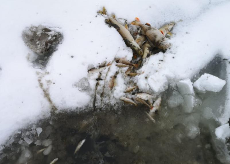 «Даже бобер сдох». На реке Гжать в селе Пречистое – массовый мор рыбы