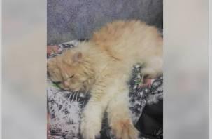 «Дорого-богато»: смолянин продает своего кота за 2,3 млн рублей
